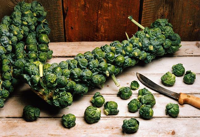 Vegetarian and Vegan Passion-14317483_1282680278409162_3754515564548489215_n.jpg