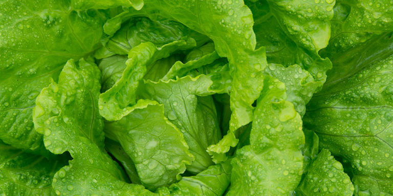 Vegetarian and Vegan Passion-1443544814-syn-hbu-1443453715-iced-lettuce.jpg