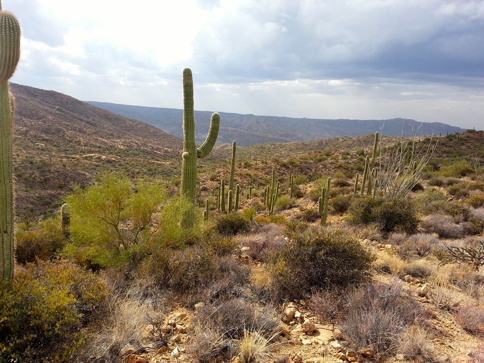Arizona Trail!-1475923_10152037309947556_1797261194_n.jpg
