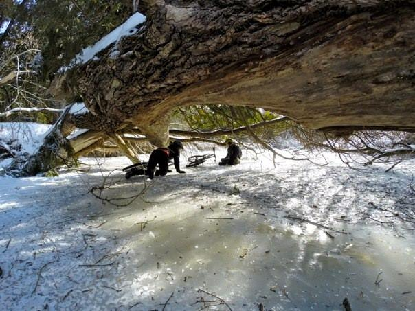 Official 2014 Winter Ice Biking Thread-1499451_586084488123405_422097070_n_zps6abb2b24.jpg
