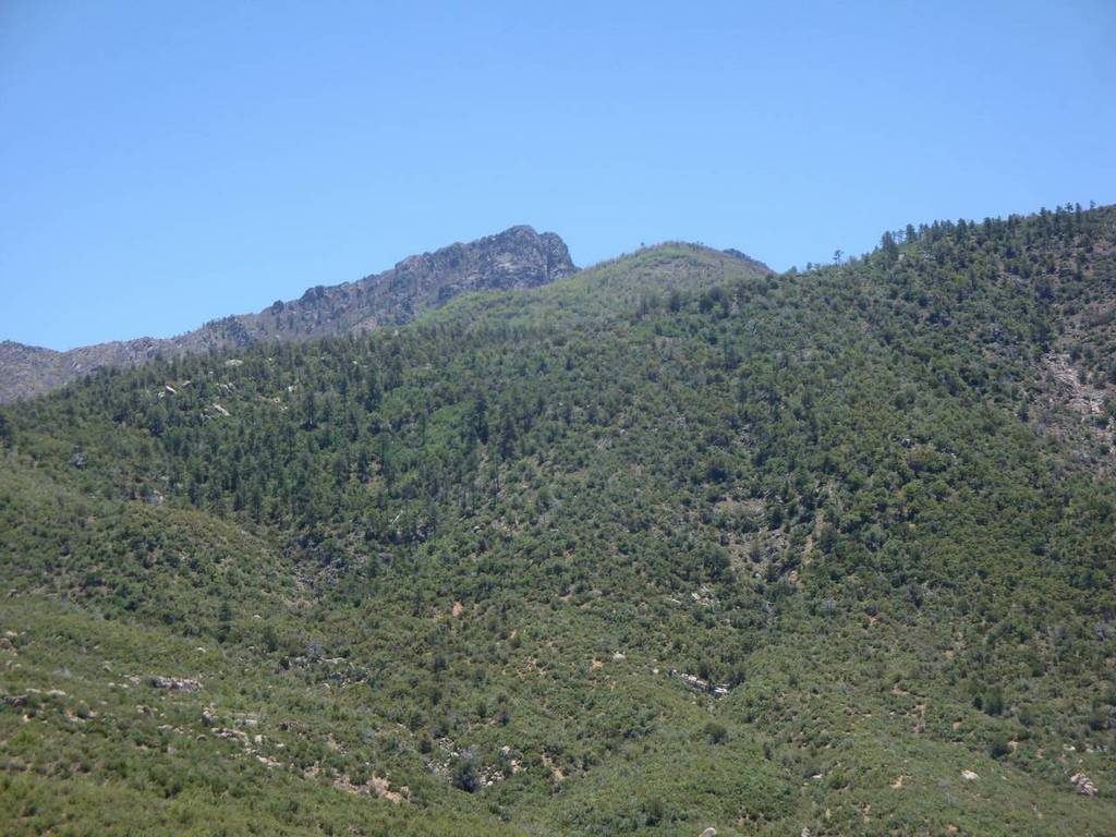 Four Peaks on a hot spring day-15_conifers.jpg