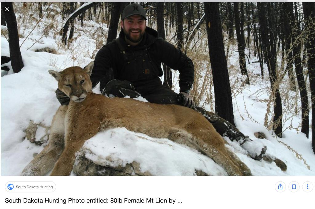 Mountain Lion Attack, Colorado.-15df2995-a1e7-41fd-ba4f-6e4b18a0bf0e.jpg