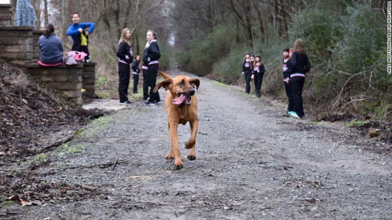 So who also runs?-160125154112-01-marathon-dog-exlarge-169.jpg