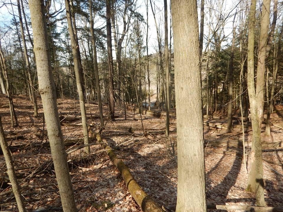 Local Trail Rides-17191058_1891194741124968_3224850319372052910_n.jpg