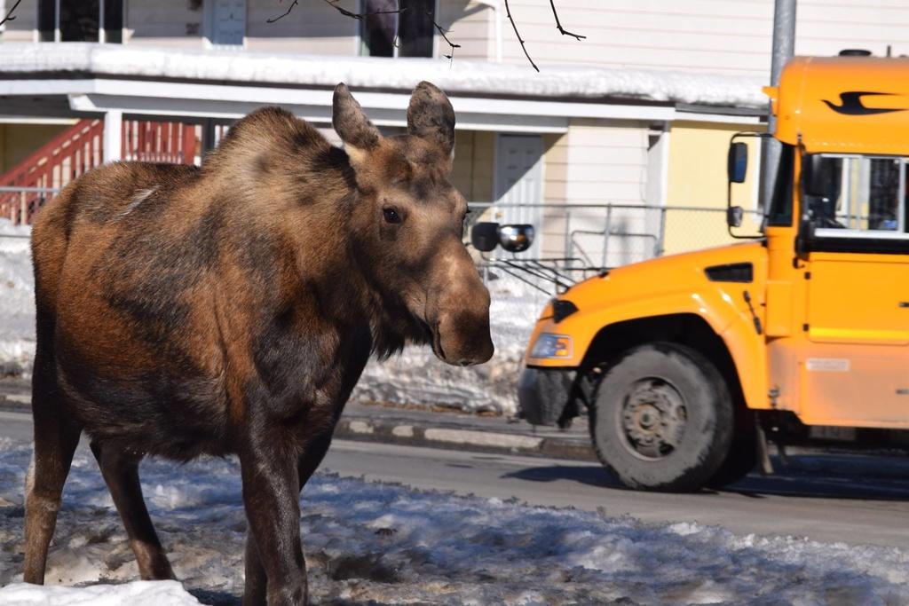 Visiting Anchorage in December-17310314_1611463928867335_6885182719989649285_o.jpg
