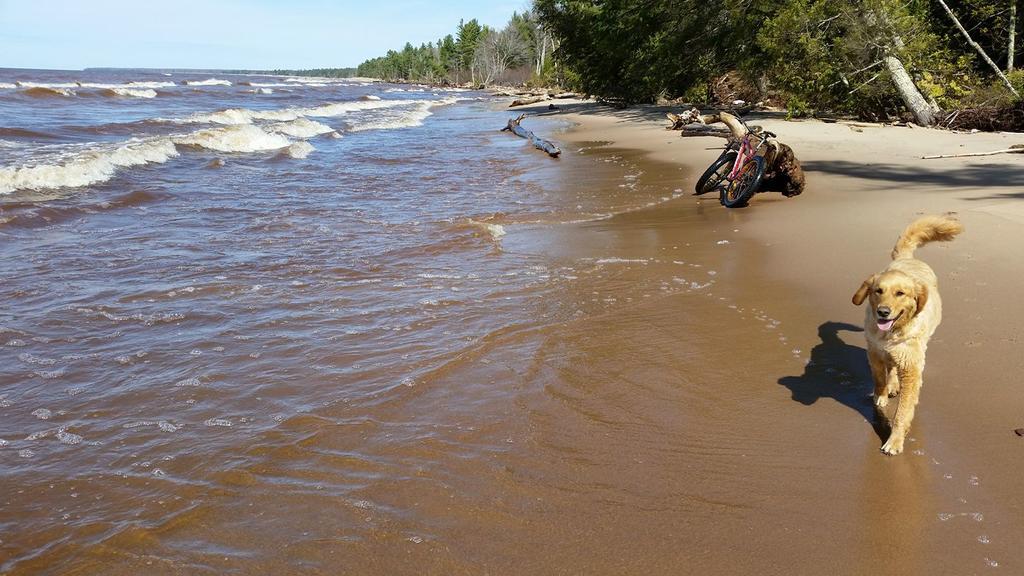 Beach/Sand riding picture thread.-18238740_1278491155603357_628985025066575322_o.jpg