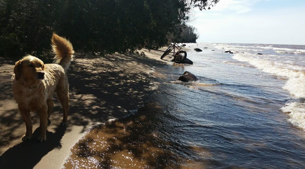 Beach/Sand riding picture thread.-18278253_1278694478916358_1370288099094940568_o.jpg