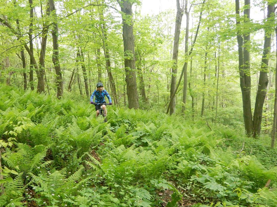 Local Trail Rides-18740237_1932585796985862_6040842656807595780_n.jpg