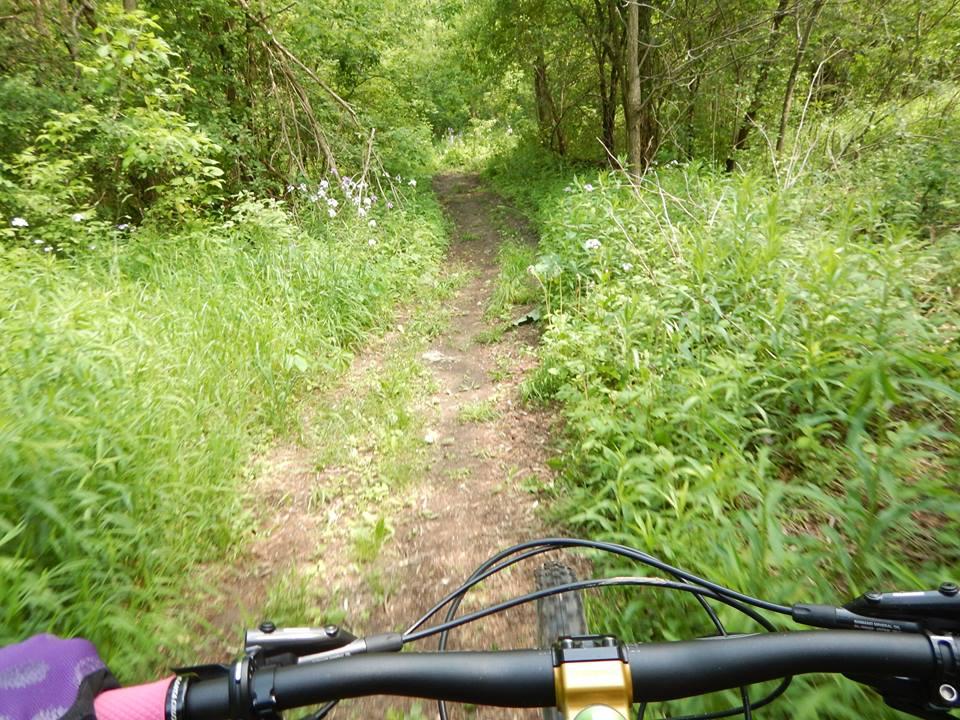 Local Trail Rides-18765966_1936277553283353_3905288181172768953_n.jpg