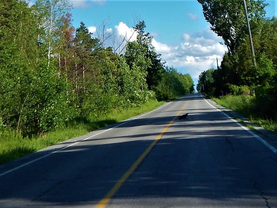 Local Trail Rides-19247868_1946969738880801_6923422966431092453_n.jpg