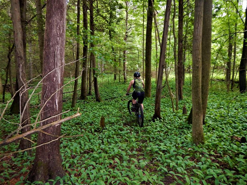 Local Trail Rides-19260410_1943567399221035_6060054983150692461_n.jpg