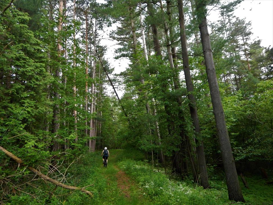 Local Trail Rides-19399384_1943561362554972_1043555611372345498_n.jpg