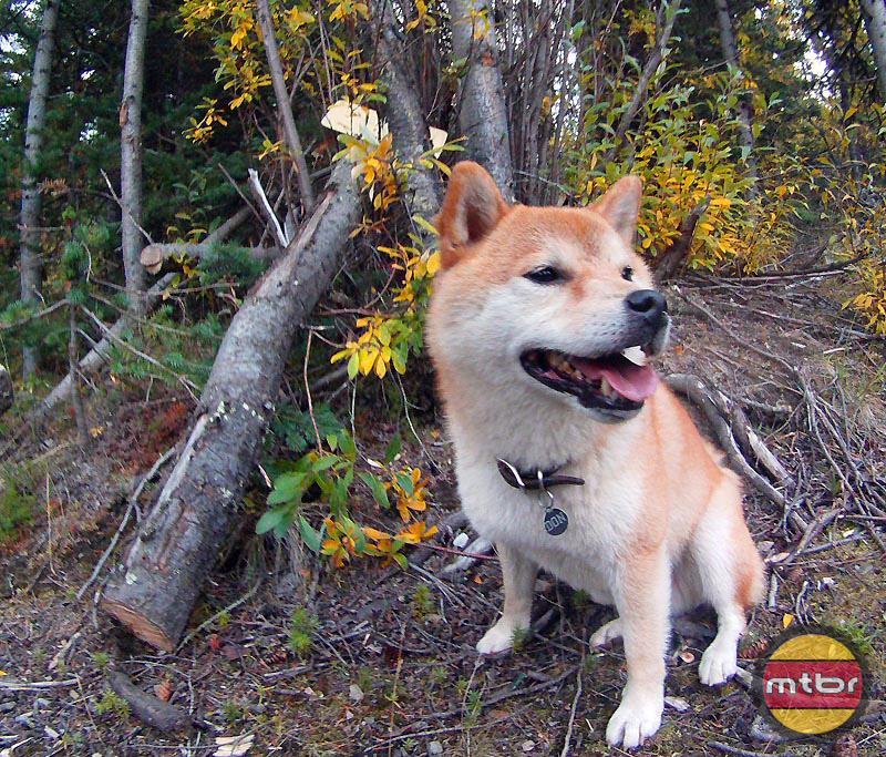 Dog-Friendly Trails, Whitehorse