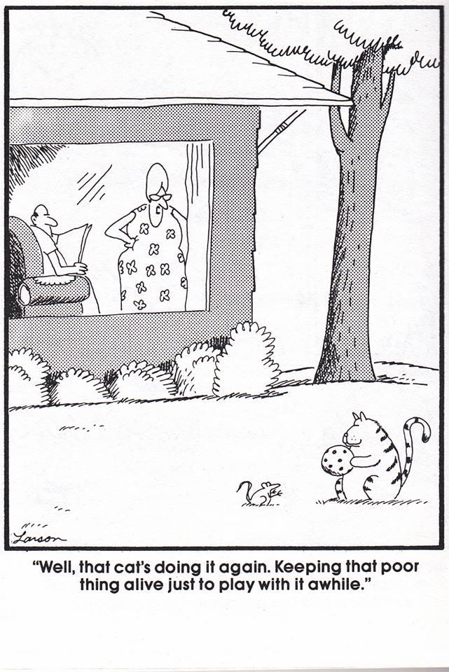 O.C. Official Daily Chuckle thread.... Comic Strip Enhanced...-19989249_454147278294105_2065879470114915032_n.jpg