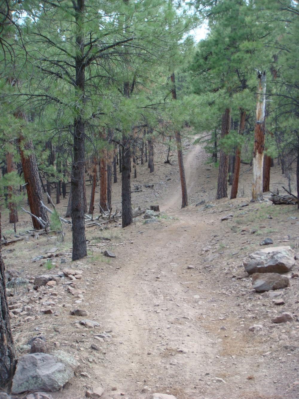 Flag Trail Updates-2.jpg