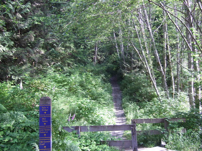 novice and kid friendly trails?-2008_0707new0002.jpg