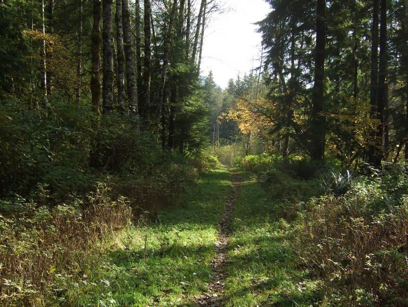 novice and kid friendly trails?-2008_1018new0017.jpg