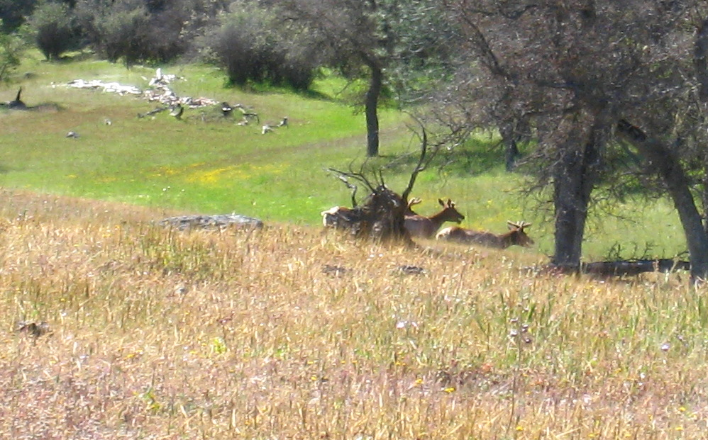 OT:Hunting Ranch Killed Mtn Lions so wouldn't eat their deer...ridiculous!-2009_04_17_coe_032_cr.jpg