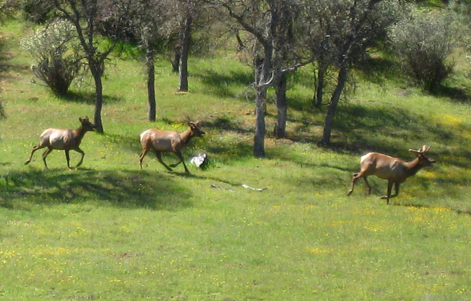 OT:Hunting Ranch Killed Mtn Lions so wouldn't eat their deer...ridiculous!-2009_04_17_coe_034_cr.jpg