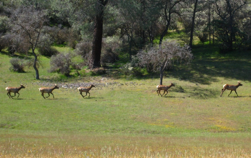 OT:Hunting Ranch Killed Mtn Lions so wouldn't eat their deer...ridiculous!-2009_04_17_coe_036_cr.jpg