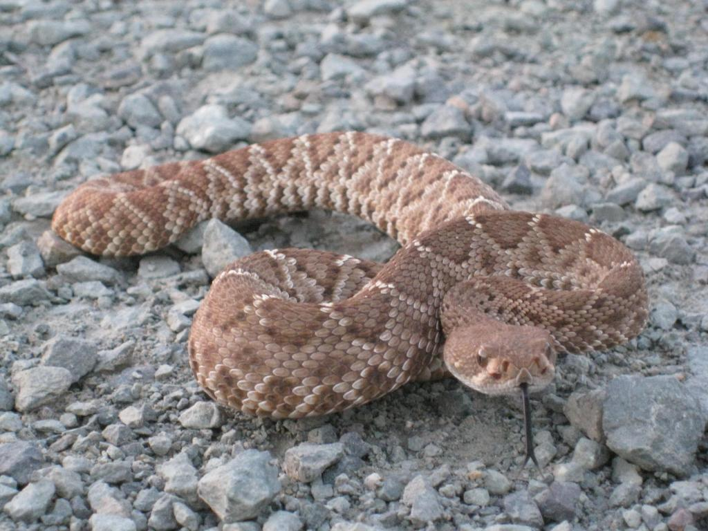 I ran across a snake the other night?-2010-265.jpg