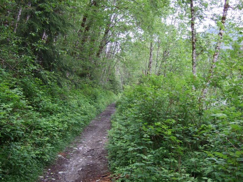 novice and kid friendly trails?-2010_0528new0015.jpg