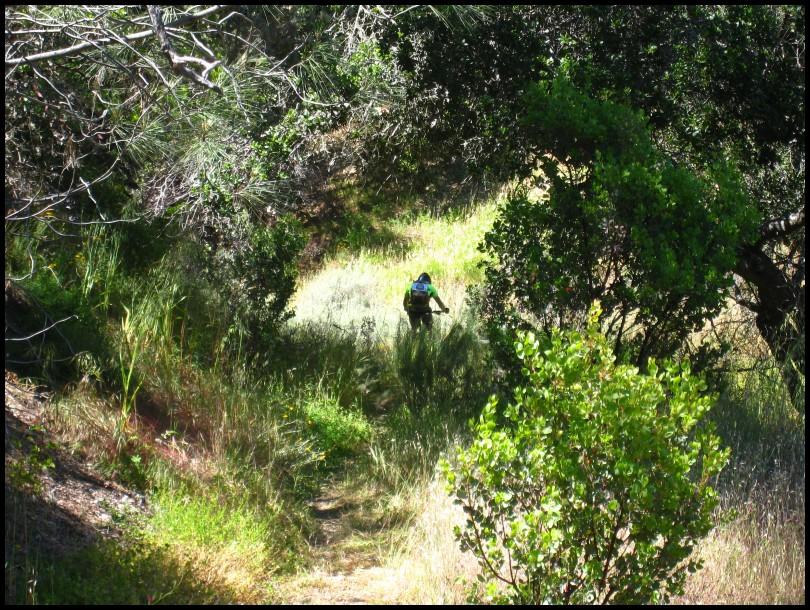 Henry W Coe Trail Work 2nd Saturday June 12 White Tank (Gibbon)-2010_05_29_ghs_02rs.jpg