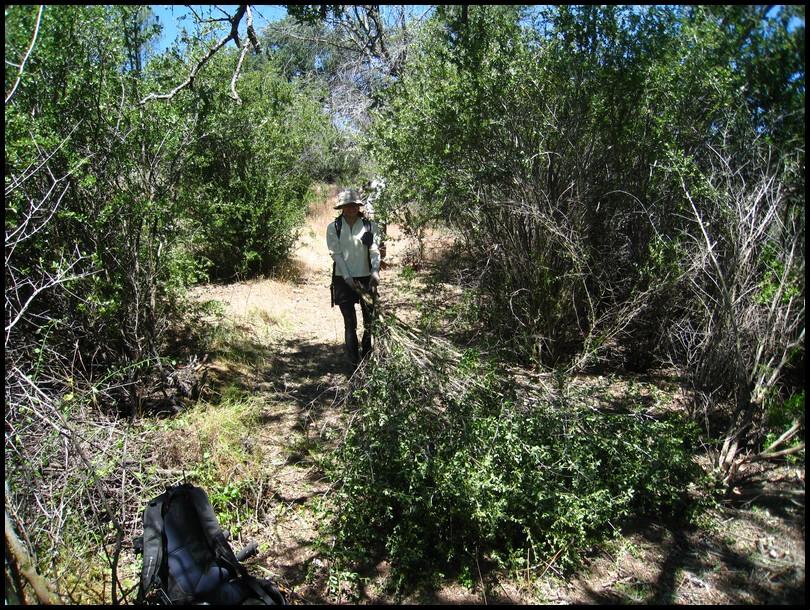 Henry W Coe Trail Work 2nd Saturday June 12 White Tank (Gibbon)-2010_06_13_coe_13.jpg