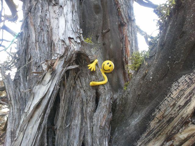 Yellowman game-2012-02-11-15.00.04.jpg