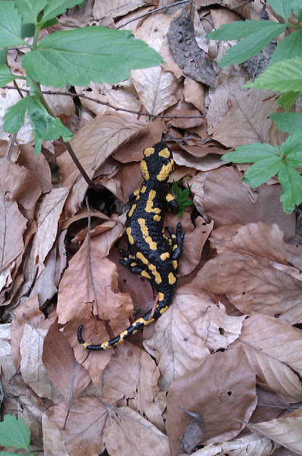 Wildlife you have seen on trail...post your pics...-2012-04-18%25u0025252014.49.17.jpg