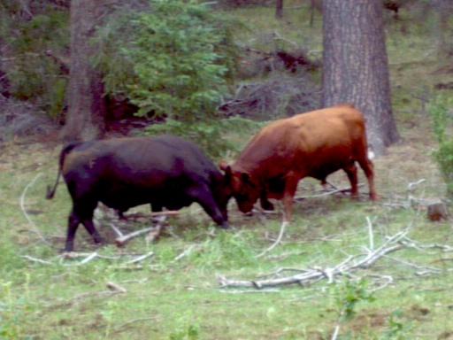 Los Burros Loop, Wildlife and trail photos-2012-07-15_11-31-04_788.jpg