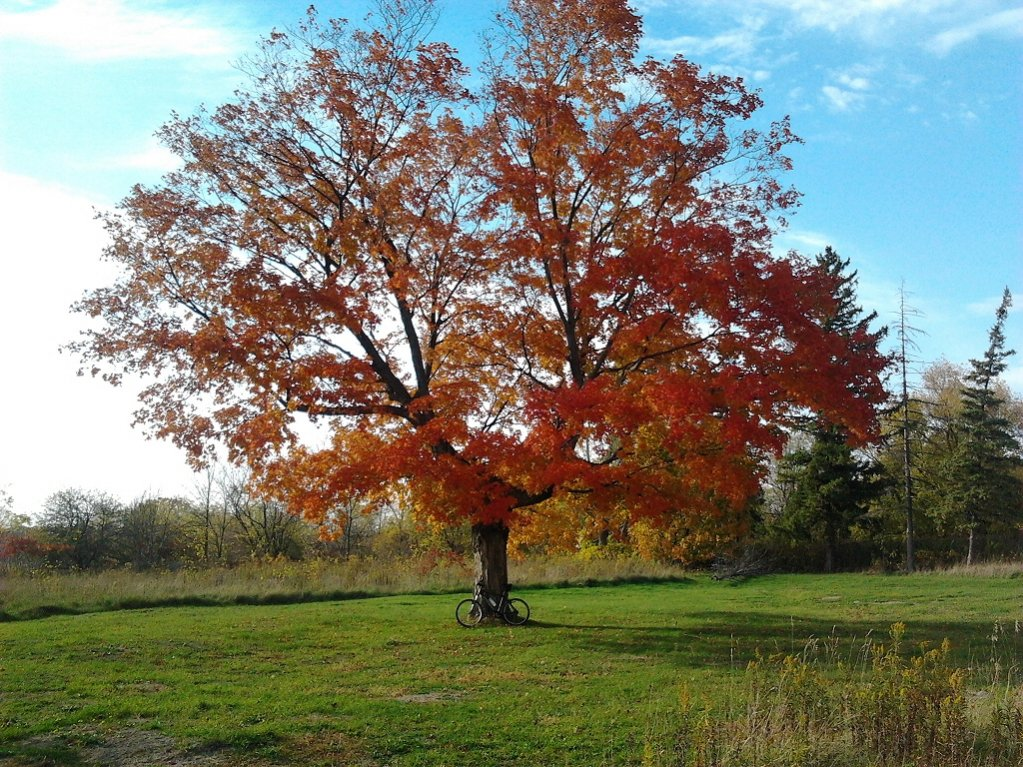 Post Pics of your Fall Foliage!!-2012-10-17-16.13.25a.jpg