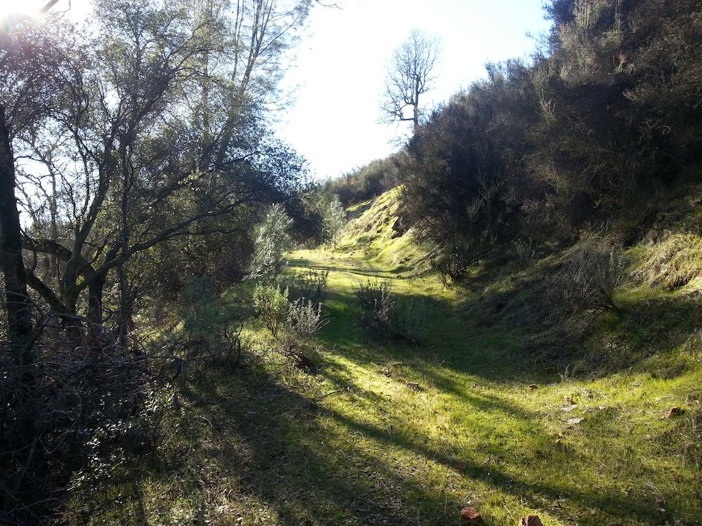 Cattle Drive-20121230_134518.jpg