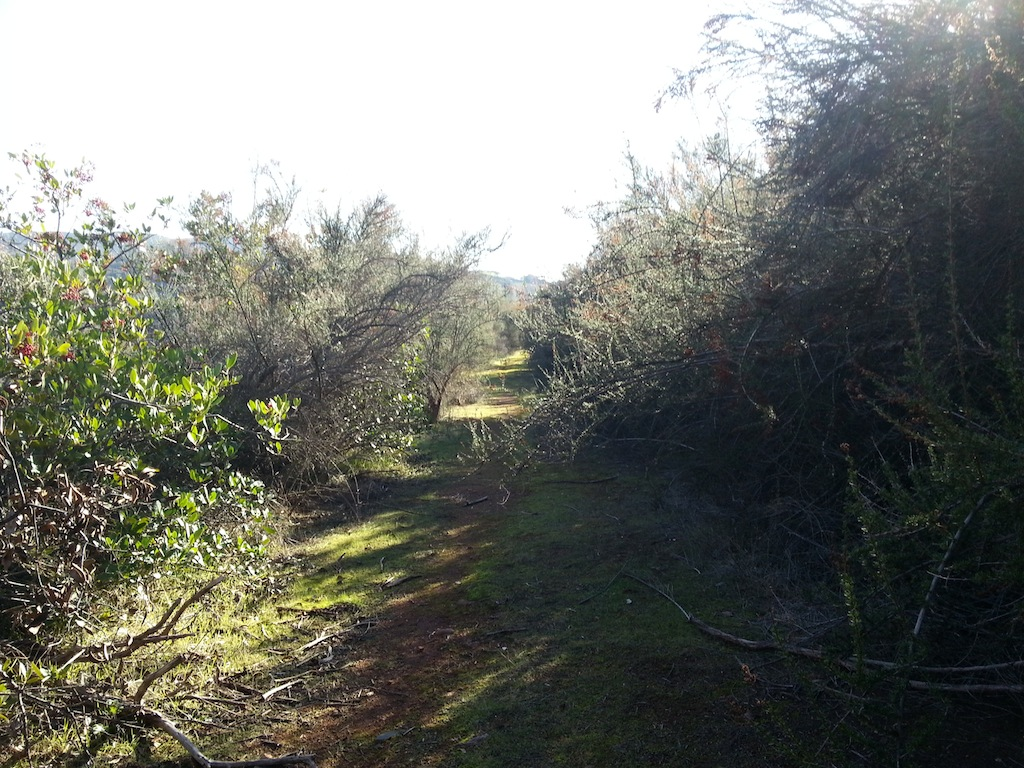 Cattle Drive-20121230_135106.jpg