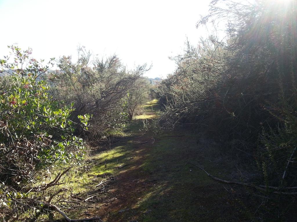 Cattle Drive-20121230_135121.jpg