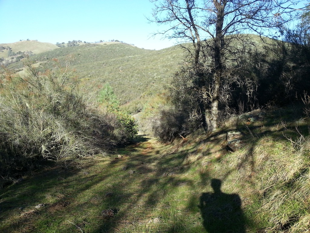 Cattle Drive-20121230_135446.jpg