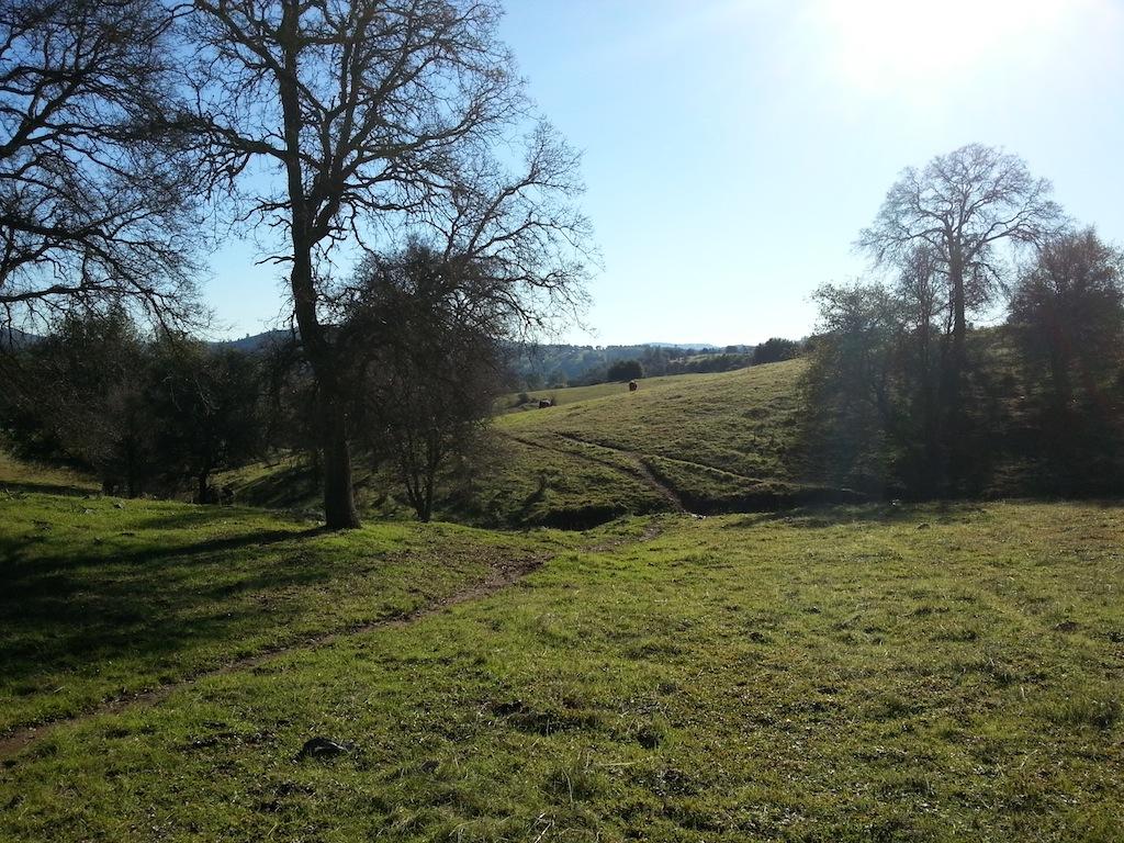 Cattle Drive-20121230_140328.jpg