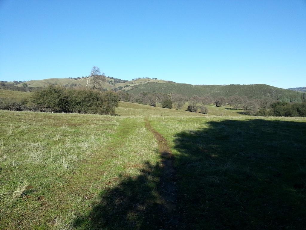 Cattle Drive-20121230_140626.jpg