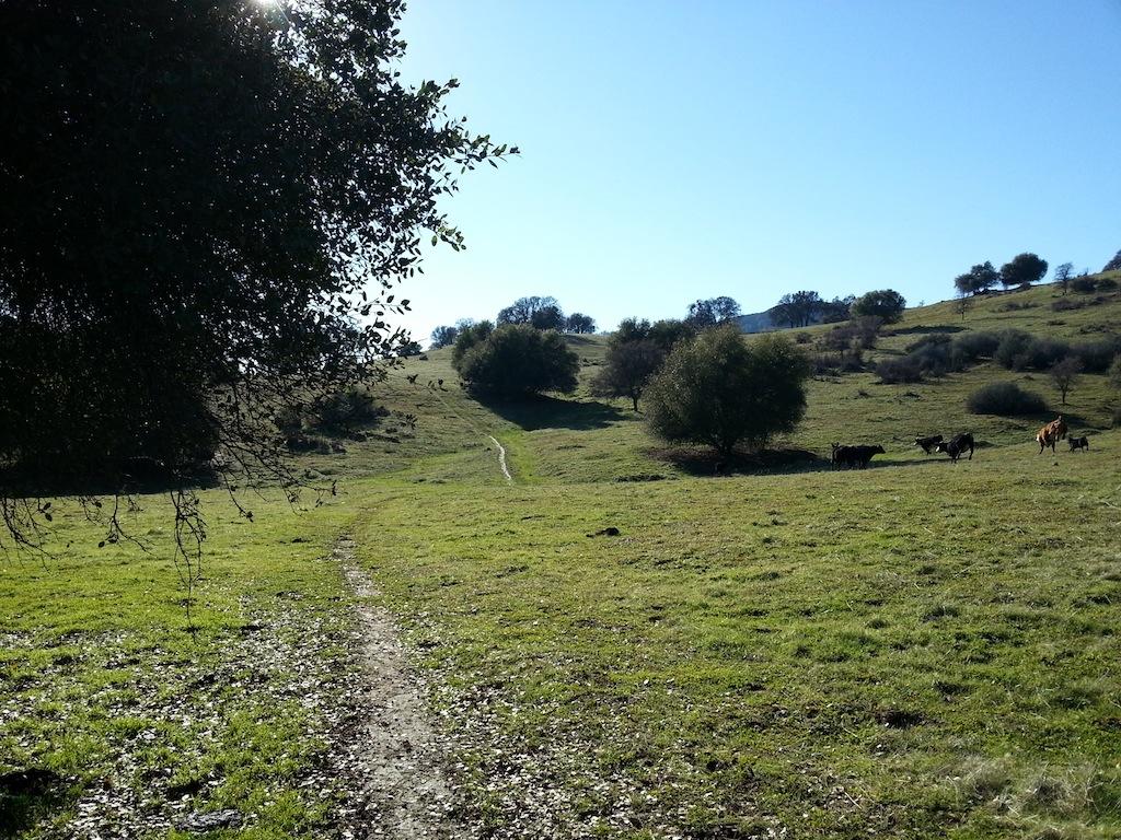 Cattle Drive-20121230_140634.jpg