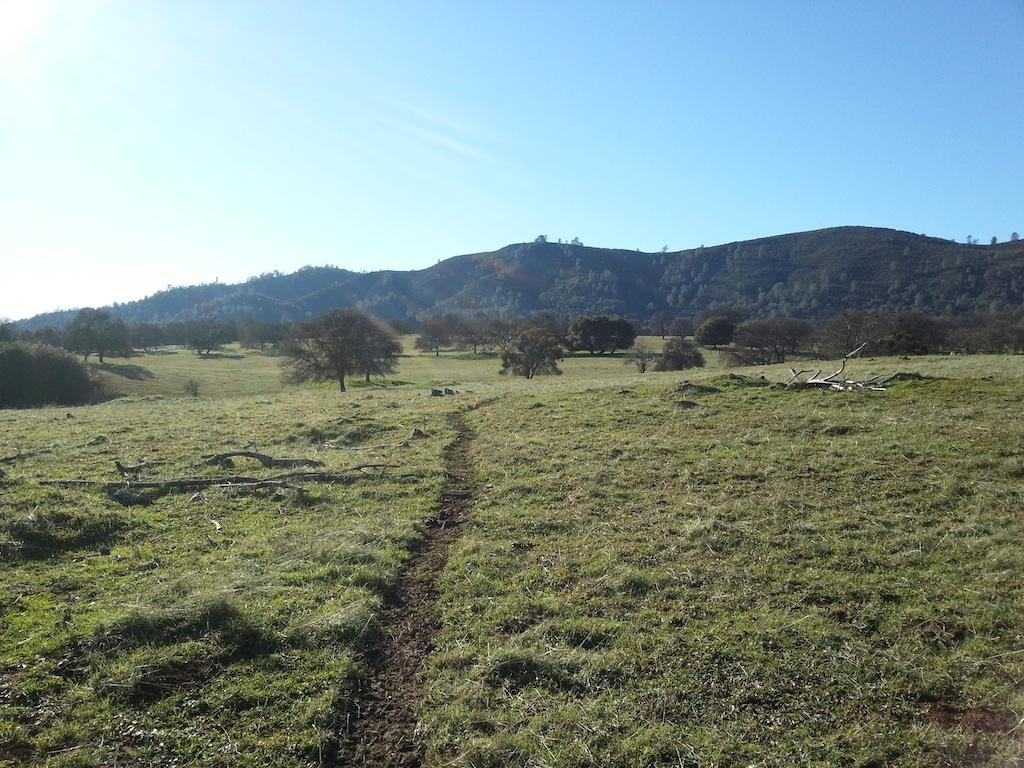 Cattle Drive-20121230_140951.jpg