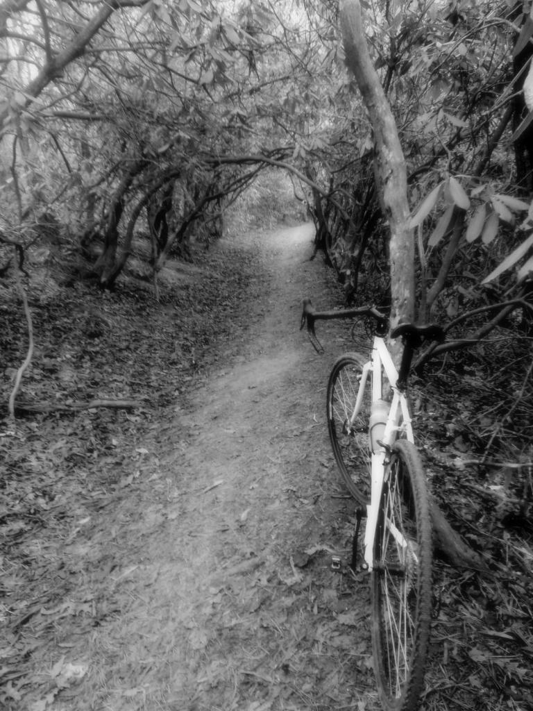 Cross Bikes on Singletrack - Post Your Photos-20121231_104207.jpg