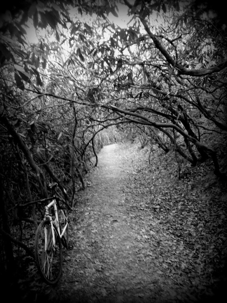 Cross Bikes on Singletrack - Post Your Photos-20121231_104236.jpg