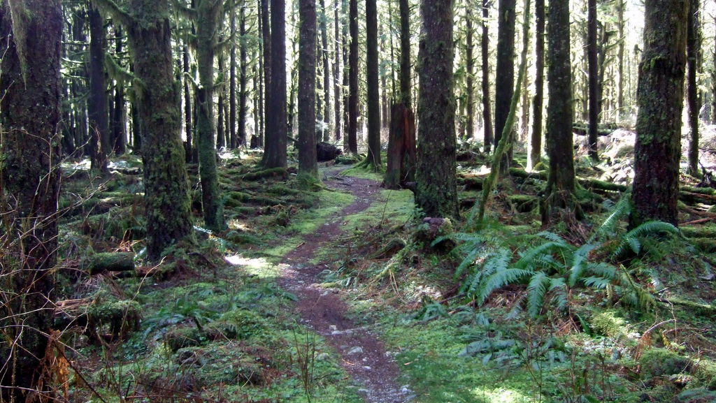 Vancouver trails to make my wife interested in MTB =)-2012_0401new0015-002.jpg