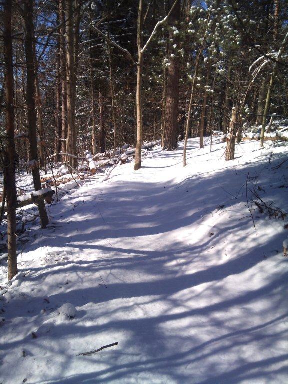 Durham Forest Conditions-2013-02-04-13.04.03.jpg