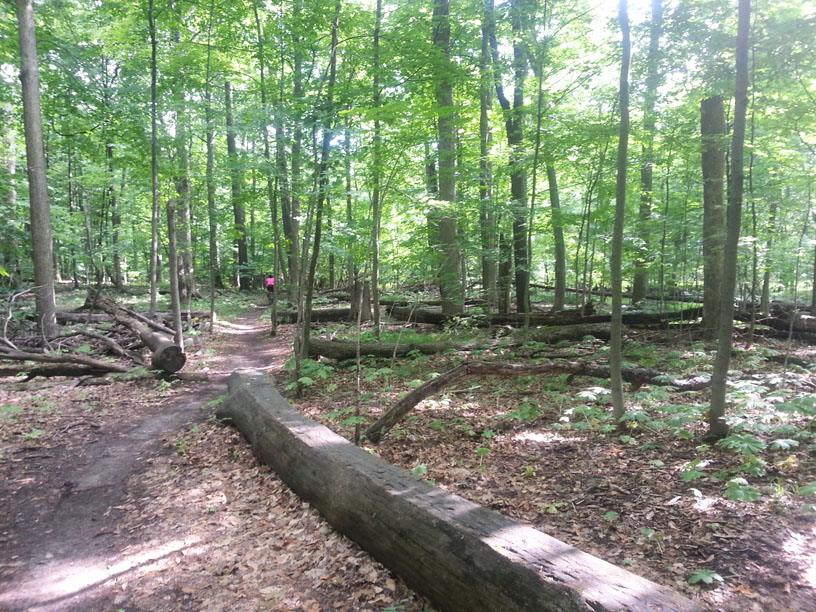 sw michigan trail update-20130616_173827.jpg
