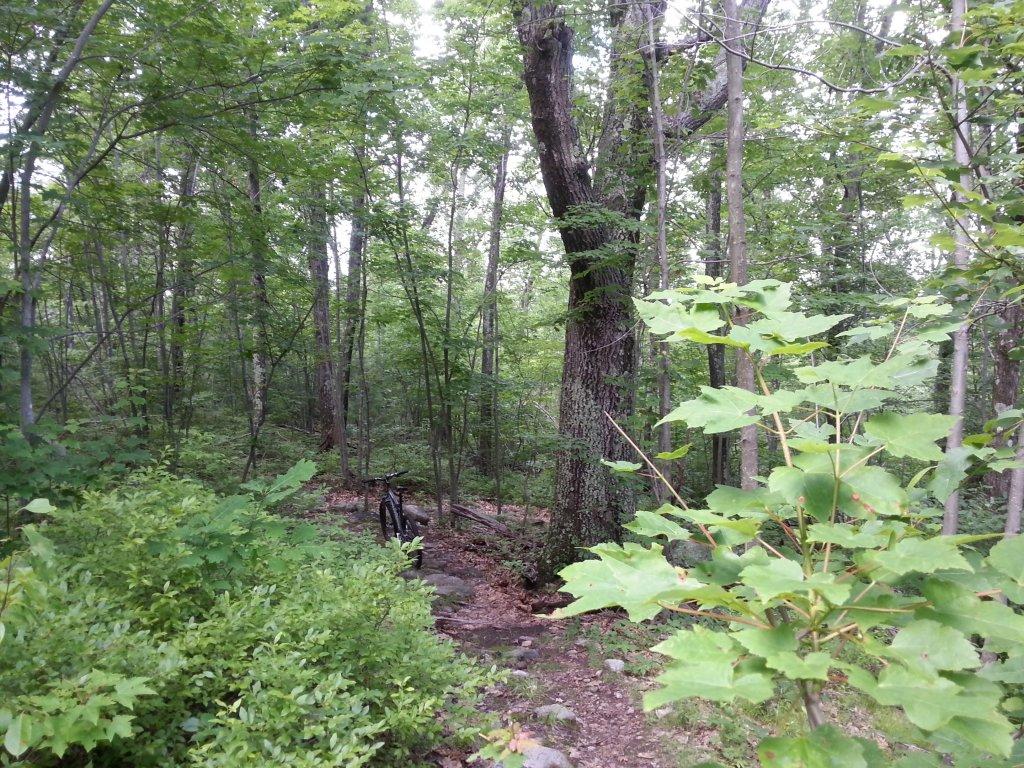 Best trails after rain-20130703_152213.jpg