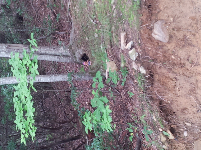 Adventures with the Pisgah Gnome-20130815_140617.jpg