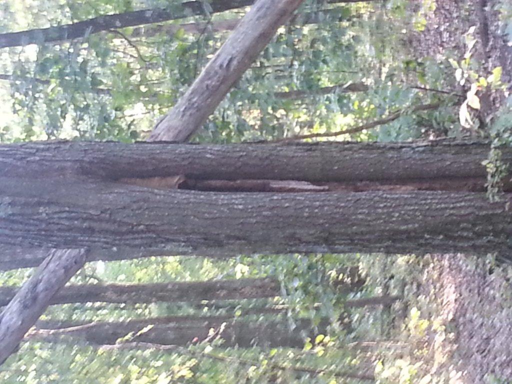 hornet nest @ moon lake-20130904_175730.jpg