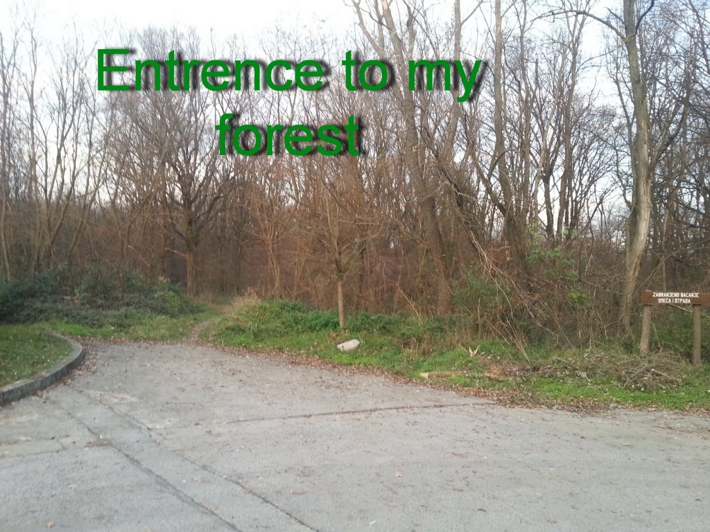 I kneed ideas for my new trail PLEASE help!!!-20131211_153714.jpg