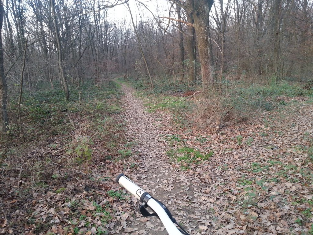 I kneed ideas for my new trail PLEASE help!!!-20131211_153749.jpg